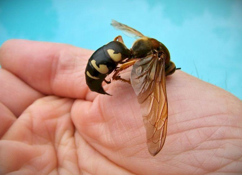 Укус осы что делать опухоль фото